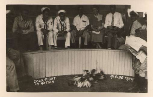 Navy Sailors Watching Cock Fight Roosters RPPC