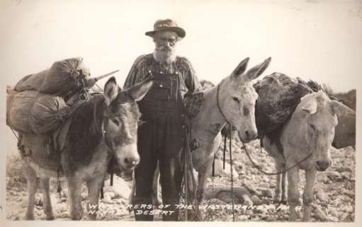 Nevada Desert Loaded Donkeys RPPC