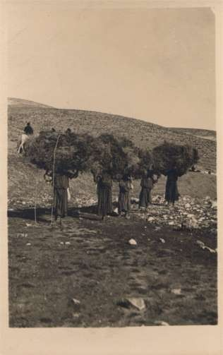 Palestine Israel Women Carrying Loads of Grass RPPC