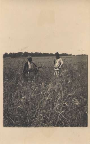Palestine Israel Grain Field Farmers RPPC