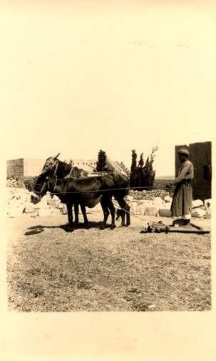 Palestine Israel Donkey-Drawn Stand