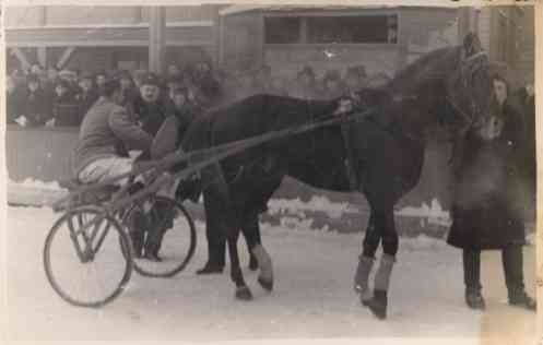 Harness Racer after Finish Real Photo Sports