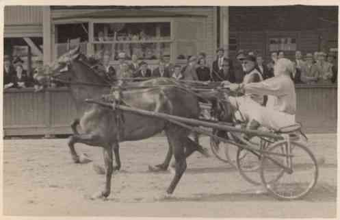 Harness Racers Real Photo Sports