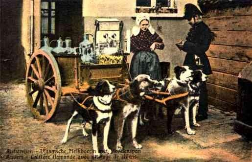 Policeman by Dog-Drawn Milk Cart