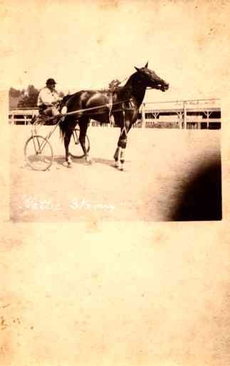 Harness Racer Horse Real Photo