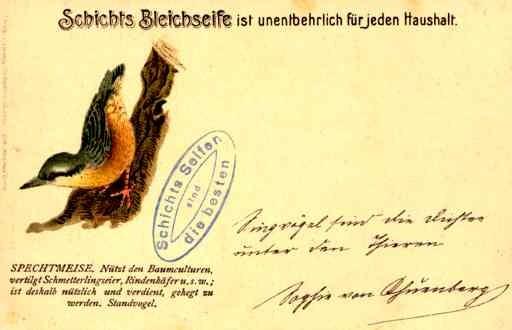 Spechtmeise Bird
