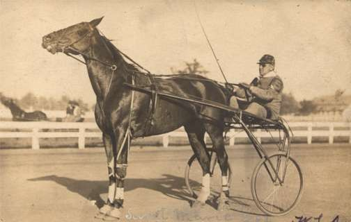 Harness Racer on Track Real Photo