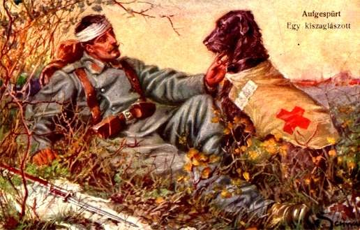 Red Cross Dog Wounded in Grass WWI