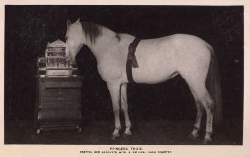 Horse Working Cash Register Real Photo
