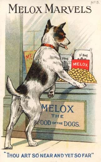 Dog Watching Dog Food Advert Melox Marvels