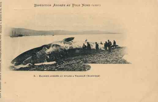 Adree Expedition to North Pole 1897 Whale