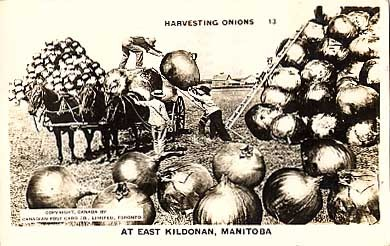 Horse-Drawn Carriage Onions Exaggeration RP