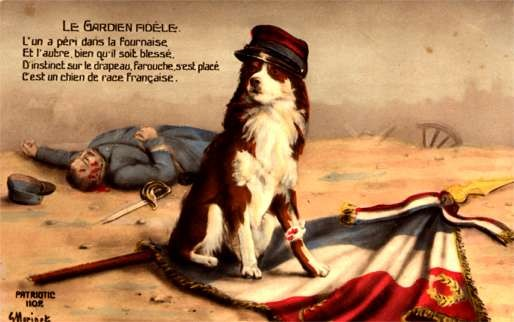 Dog Wounded Flag Real Photo