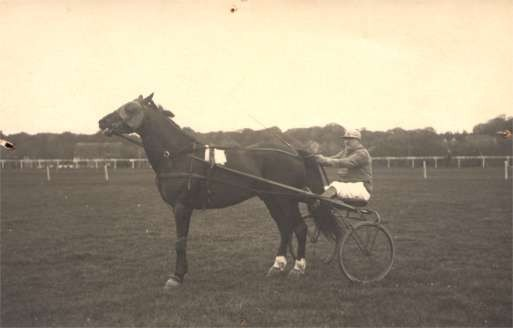 Harness Racer Ready to Race Real Photo