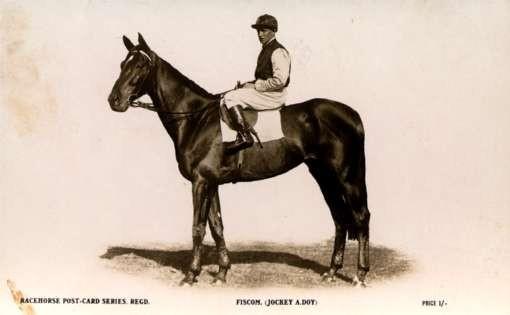 Jockey Horse Real Photo