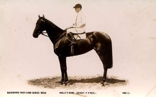 Racer on Horse Real Photo