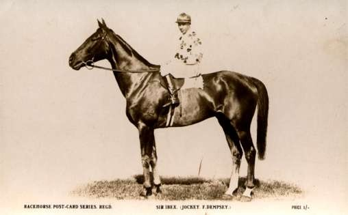 Horse Racer Real Photo