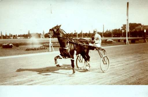 Harness Racer on Road Real Photo