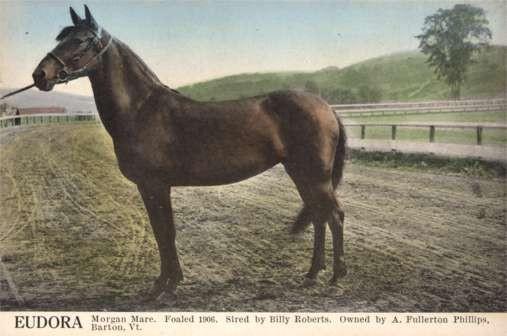Horse Eudora