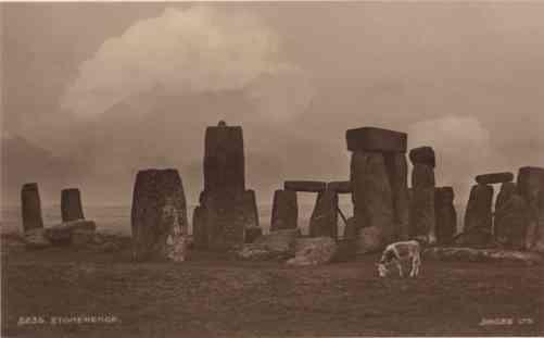 UK Stonehenge Grazing Cow Real Photo