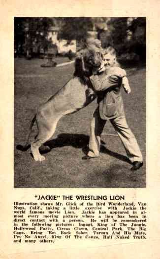 Trainer Glick Wrestling with Lion