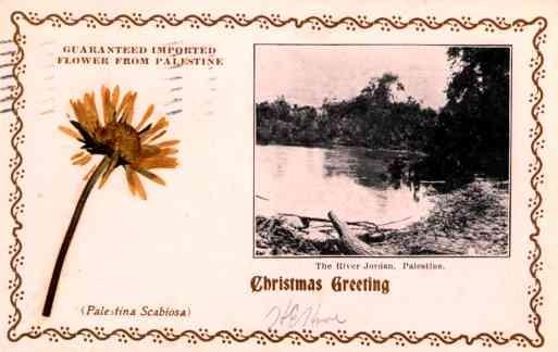 Dried Flower Palestine River Christmas