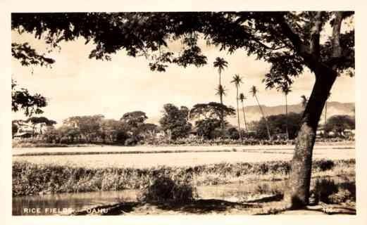 Hawaii Oahu Rice Field Real Photo