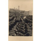 Palestine Israel Rows of Goats RPPC