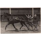 Harness Racer Real Photo Sports