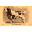Dog Cocker Spaniel Champion