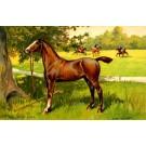 Polo Horse Sports