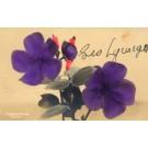 Hawaii Flowers Hand-Tinted RPPC