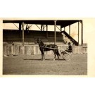 Harness Horse Racer Real Photo