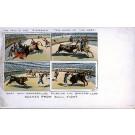 Bull Fighting Scenes