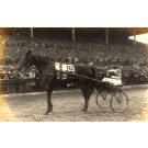 Harness Racer by Stand Real Photo