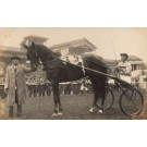 Harness Racer Tokyo Race Track Real Photo