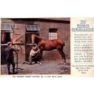Advertising Horse Power Clipper
