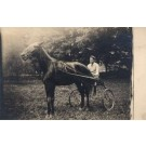 Harness Racing in Field Real Photo