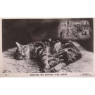 Wain Fighting Cats Dreaming Real Photo