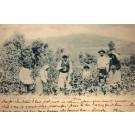 Spain Grand Canary Grape Farmers