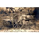 Black by Bull-Drawn Cart Real Photo