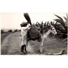 Farmer by Donkey Brehme Real Photo