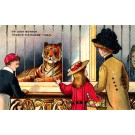 Tiger in Cage Zoo Family Advert