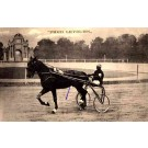 Harness Racer Leyburn in Italy, Faenza 1911