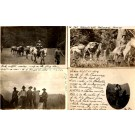 Telephone Crew Horses Dog RP WA