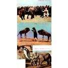 Circus Elephant Lions Japan Set
