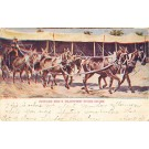 Circus Western Buffalo Bill