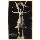Panama-Pacific Exposition 1915 Horse RPPC