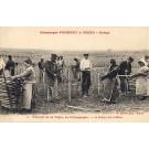 Champaigne Pommery Greno French