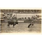 Bull Fight Real Photo